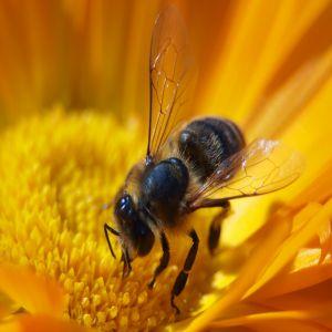 eat clean honey bees